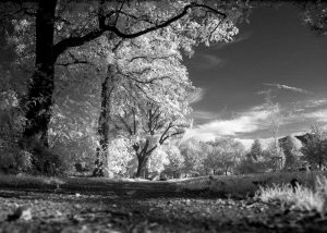 Read more about the article Trees in Park